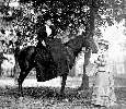 Picture of Hester Rebecca Mortgrage on a horse @1885
